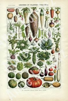 Vintage French dictionary page, botanical illustration, vegetable print 20s wall hanging