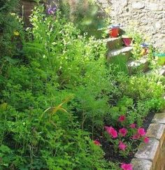 Herb garden on top of retaining wall - would be cool idea when we get the wall built to keep the creek in bounds.....