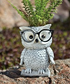 Another great find on #zulily! Owl Planter by Roman #zulilyfinds
