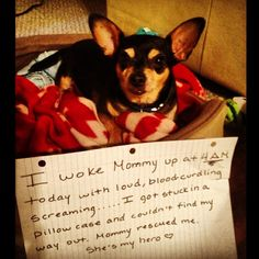 10 most Googled questions about dogs answered by Google and the dogs of DogShaming.