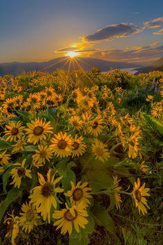 Magic light, by Liping Yu... #sunrise #light #hiking #wildflowers #oregan #rowena #rowenacrest