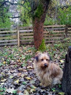 autor: jlez, Poland (tytuł: Natura 9004 - jesień, sad, liście i pies)