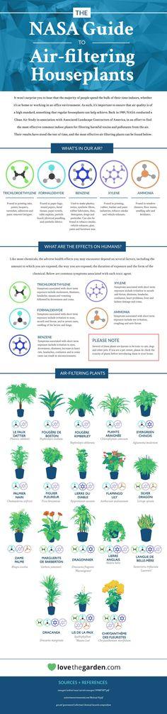 Les plantes dépolluantes de nos intérieurs selon la nasa. Ces plantes permettent de purifier l'air de nos maisons/bureaux en filtrant par exemple le benzène, l'ammoniac etc..Plus d'infos sur Authentico.fr
