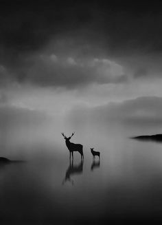 ☾ Midnight Dreams ☽ dreamy dramatic black and white photography - deer nightscape
