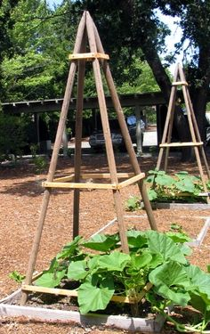 Pipe Trellis. -- need to try something sturdy like this for squash. My first year growing them, had them growing on the ground, and chipmunks chewed into everyone of them!!  :(