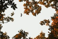 Top 5 Stocksy images by PhotoCosma Forest Road, Autumn Morning, Blue Backgrounds, February, Wordpress, Posts, Abstract, Top, Image