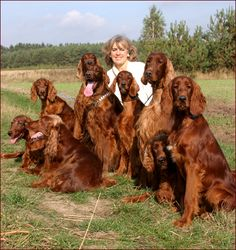 Aren't they beautiful? And look at all those wonderful Irish Setter personalities!
