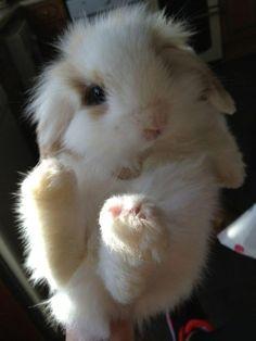 fluffy baby rabbit.