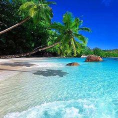 Tropical Beaches With Palm Trees Vacation Places, Dream Vacations, Vacation Spots, Places To Travel, Vacation Destinations, Most Beautiful Beaches, Beautiful Places, Paradis Tropical, Beach Wallpaper