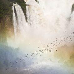BRASIL NATURAL VIRA TEMA DE LIVRO - ANUAL DESIGN
