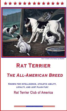 Rat Terriers, the All American Breed!