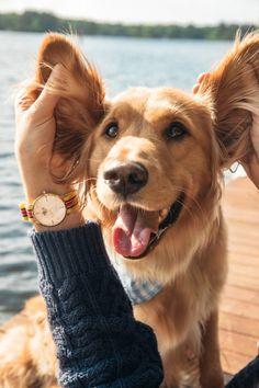 Oh pretty doggie