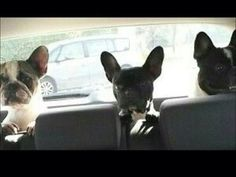French Bulldogs, Road Trippin'