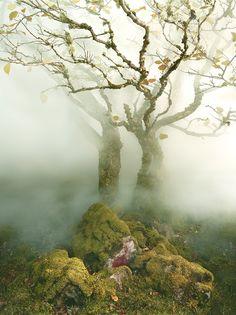 Albert Watson · Tree