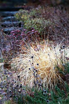 Pennisetum alopecuroides 'Hameln' (Fountain Grass) + Rudbeckia seed pods and Ruby Sedum, winter