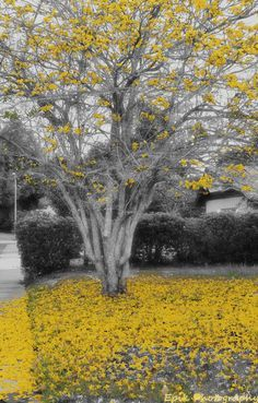 Yellow Splash of Color / Outdoor photography black and white photo with a spot of color, yellow Yellow Photography, Splash Photography, Photography Pics, Outdoor Photography, Black And White Photography, Black And White Painting, Black N White, Black White Photos, Grey Yellow