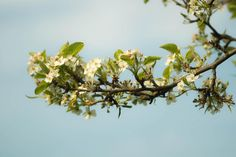 branch blossoms -  branch blossoms free stock photo Dimensions:5456 x 3632 Size:1.04 MB  - http://www.welovesolo.com/branch-blossoms/