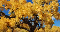 Fall Color - New Mexico Tourism - Travel & Vacation Guide