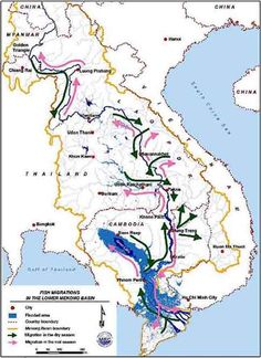 Fish migrations in the Lower Mekong Basin (adapted from Poulsen et al. 2002)