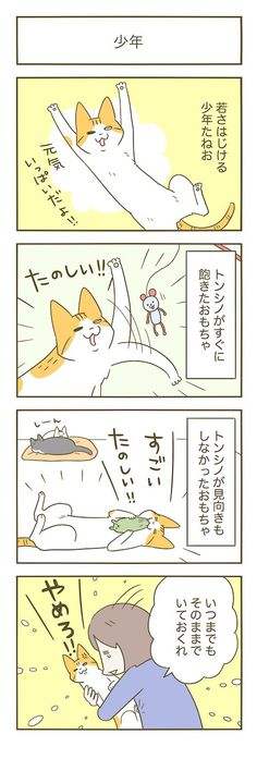 少年   うちの猫がまた変なことしてる。【猫まんが】 Animals And Pets, Cute Animals, Cat Comics, Fancy, Funny Cute, Neko, Dog Cat, Animation, Illustration