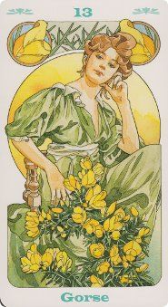 GORSE Elixir Floral, Astro Tarot, Bach Flowers, Catholic Art, Medicinal Plants, Mother Earth, Trees To Plant, Magick, Mystic