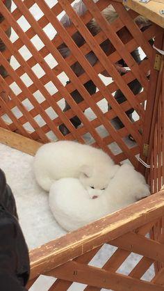 秋田犬とかいうパワー系日本犬wwwww:哲学ニュースnwk http://blog.livedoor.jp/nwknews/archives/4938004.html