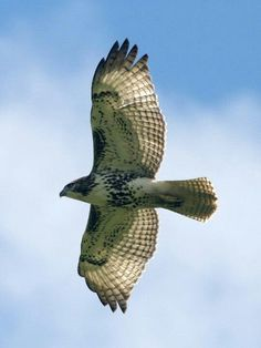 Hawk ~ Power, Magic, Messenger. Hawk is the messenger, the protector and the visionaries of the Air. It holds the key to higher levels of consciousness. This totem awakens vision and inspires a creative life purpose ~ lindsdomain