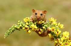 Quand ils sont dans nos caves ou dans nos cuisines, les rongeurs sont souvent considérés comme des ravageurs repoussants. Mais dans les champs et les forêts, ils sont beaucoup moins intimidants. DGS vous présente de minuscules souris sauvages dans leur milieu naturel, j...