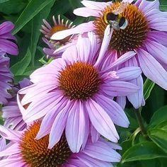 Dove c'è Pink c'è bellezza . . La bellezza salverà il mondo Ne sono sicura Fiori . .😍🌼🌼🌼🌼🌼🌼🌼🌼🌼🌼🌼🌼🌼 . #yellow #pink #lightpink #violet #green #fiori #flowers #blossoms #fioritura #nature #natura #primavera #gardening #spring #natural #iloveflowers #naturephoto #color #colore #petali #colors #bellezza #elegance #giugno #june #italy #prada #verona #botanical