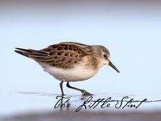 #GBWC #birdconservation #savebird #savelife #birdindanger #birdlife #birds