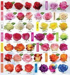 Rose Varieties | Fetish Flora
