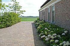 hortensia tuin - Google zoeken