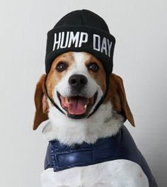 True Black American Beagle Outfitters Hump Day Beanie  -- Shop online at American Eagle and get cash back!