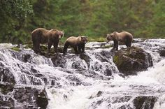 3 Things You'll See On Our Alaska Expeditions