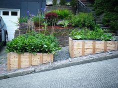 Great raised bed gardens in parking strip. #garden #street #sidewalk