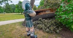 Michigan State campus toppled tree at least 350 years old