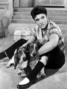 Elvis Presley & Basset Hounds                              …