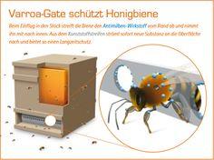 Varroa-Gate schützt Honigbiene