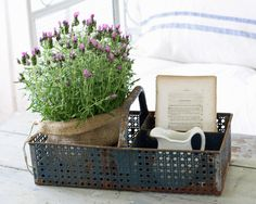 French lavendar as centerpiece in old crate. Love for kitchen table centerpiece.