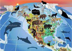 Ameryka północna - Fauna