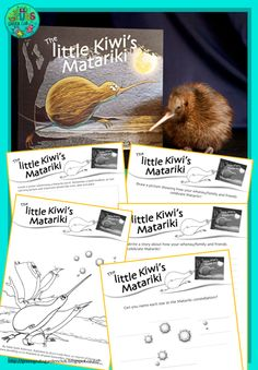 FREE DOWNLOAD ~The Little Kiwi's Matariki~ follow up activities! {Green Grubs Garden Club Blog}