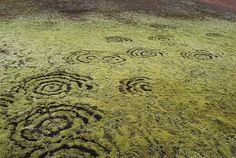 La photo montre des cercles esquissés sur un tapis d'herbes ou de lichen.