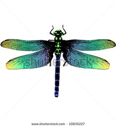 Rainbow dragonfly Stock Photos, Rainbow dragonfly Stock ...