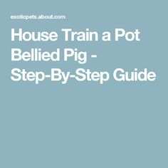 Want to house train your pot-bellied pig? This simple how-to can help you have a well-trained pig. Mini Potbelly Pigs, Mini Pigs, Potty Training Tips, Training Your Dog, Pig Information, Pot Belly Pigs, Pet Pigs, Flying Pig, How To Train Your