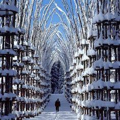 La Cattedrale Vegetale outside of Bergamo, Italy.