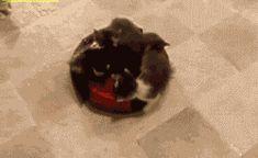 可愛すぎる猫画像貼るwwwwwwwwwwwww