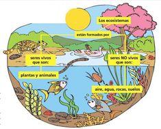Factores bióticos y abióticos de la biosfera Biology Lessons, Science Biology, Beautiful Sea Creatures, Inside Job, Giza, Science And Nature, Third Grade, Comprehension, Social Studies