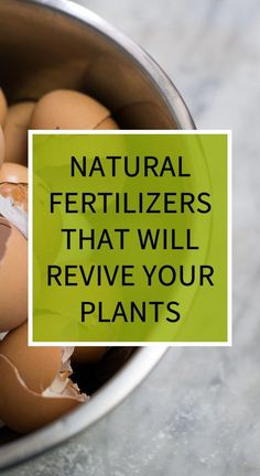 Natural Fertilizers That Will Revive Your Plants remedies for allergies remedies for constipation remedies for diabetes remedies for eczema remedies for sleep Natural Remedies For Heartburn, Natural Teething Remedies, Eczema Remedies, Cold Home Remedies, Cough Remedies, Homeopathic Remedies, Natural Cures, Diarrhea Remedies, Natural Health