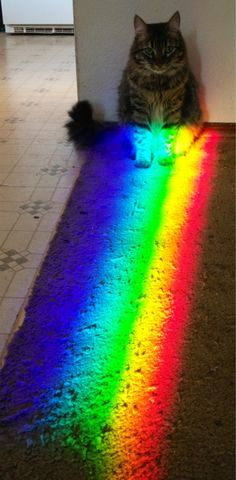 at the end of the rainbow...original pinner: My pretty boy posing cute cat