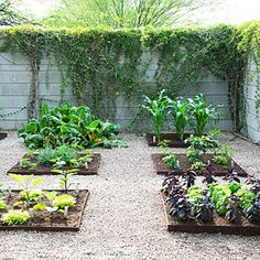Simple vegetable garden